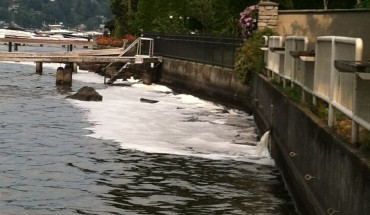 soap suds washing into Lake Washington