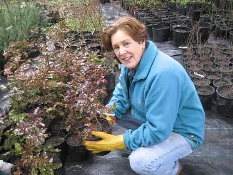 Green Kirkland Steward with native plant pots