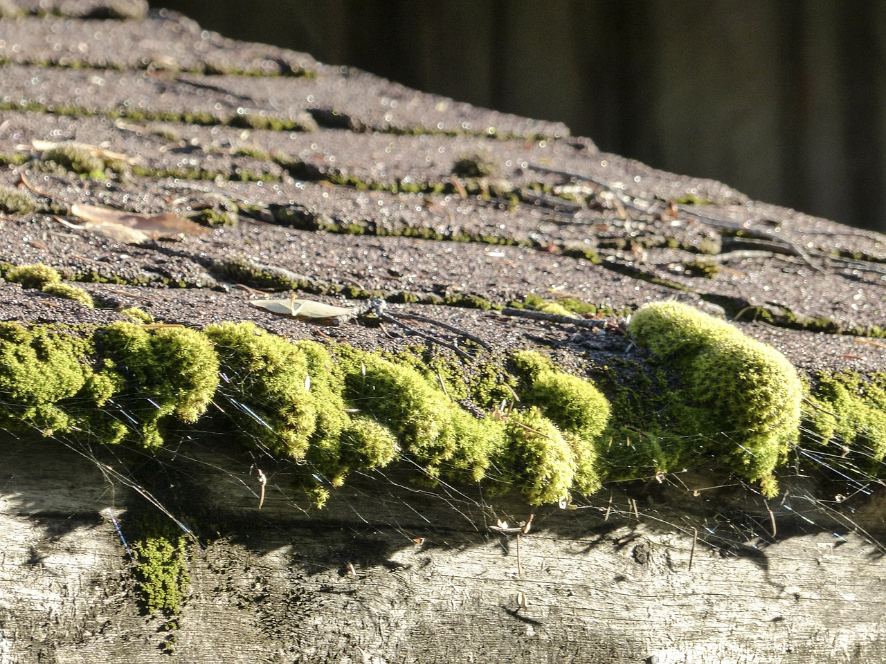 Dealing With A Mossy Roof The Environmentally Friendly Way