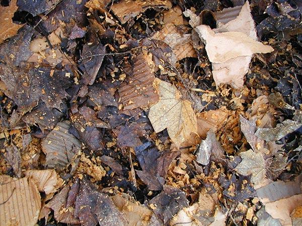 worm bin bedding made of leaves and shredded cardboard